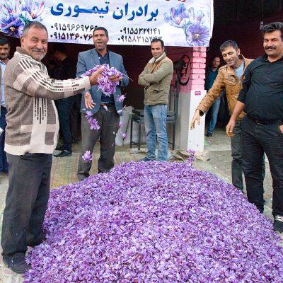 Männer beim Verhandeln über den Kilopreis der Safranblüten.