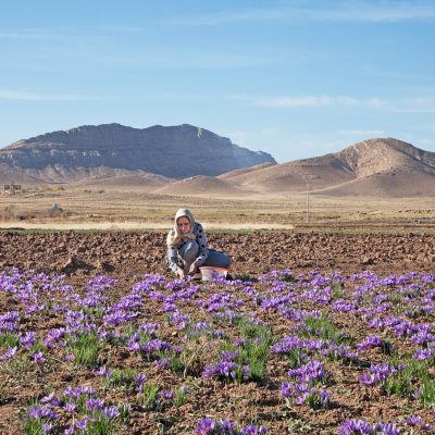 Safran ist das teuerste Gewürz der Welt. Der weltweit größte Safranexporteur ist Iran und bietet hervorragende Safranqualität. Hauptanbaugebiete des Safrans liegen im Nordosten Irans, Provinz Khorasan, und werden von den Safranbauern ab Mitte Oktober geerntet.