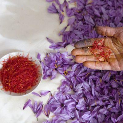 Aus einem Kilogramm Safranblüten entstehen ca. 14 gramm Safran.