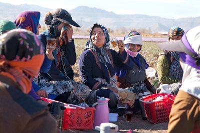 In der Pause trinken die Erntehelfer schwarzen Tee auf der Safranplantage in Talkhebakhsh.
